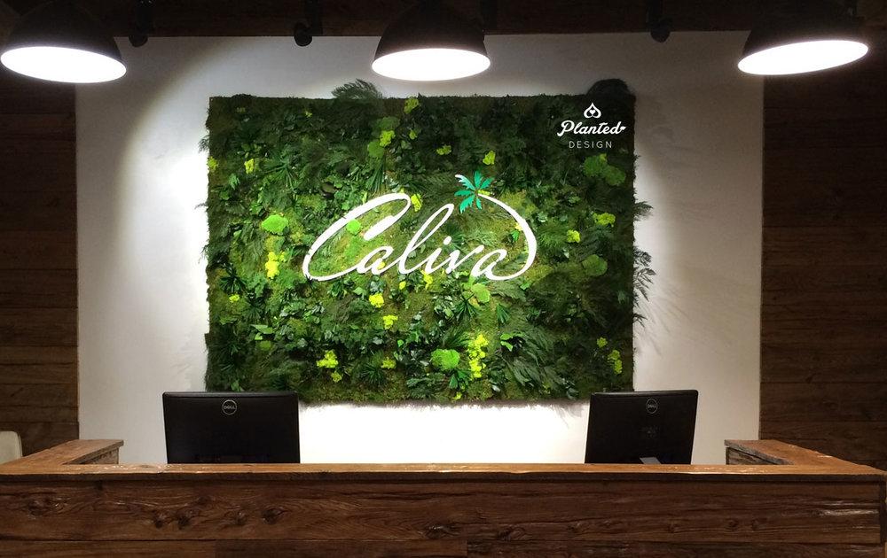 Caliva - Moss Wall