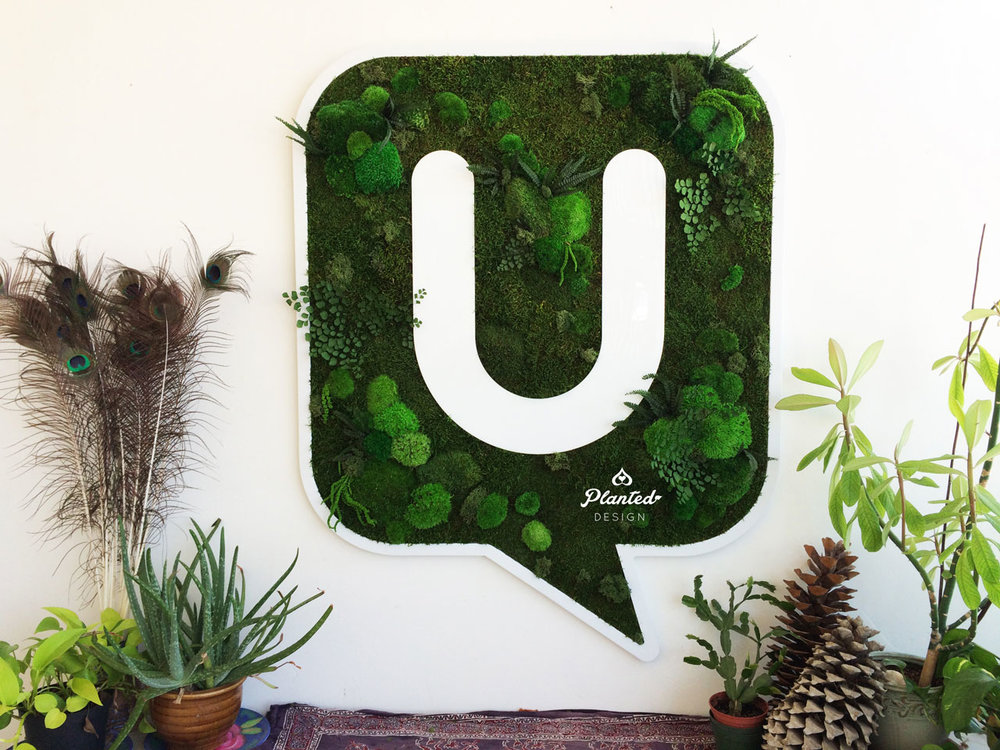 Laxmi U  - Moss Wall