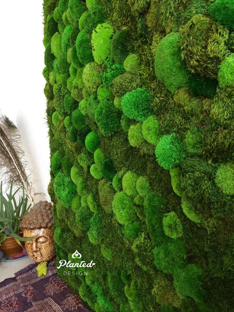 PlantedDesign-Moss-Wall-SF-ProsperWorks-1.jpg