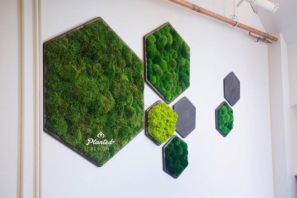 NRDC - Living Wall & Moss Wall