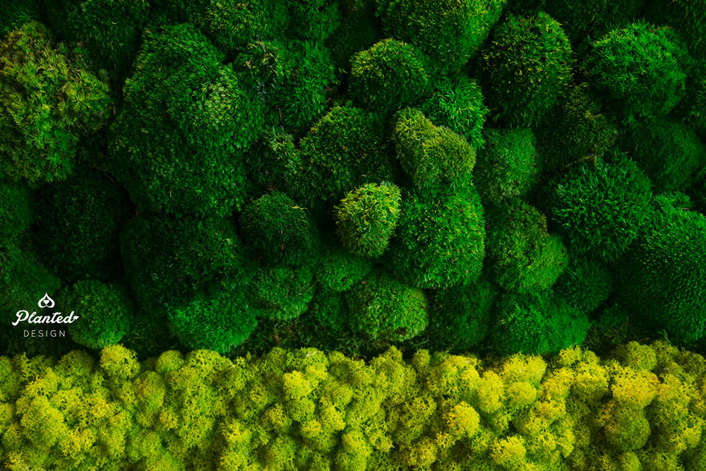 PlantedDesign-Moss-Wall-SF-IronSource-10.jpg