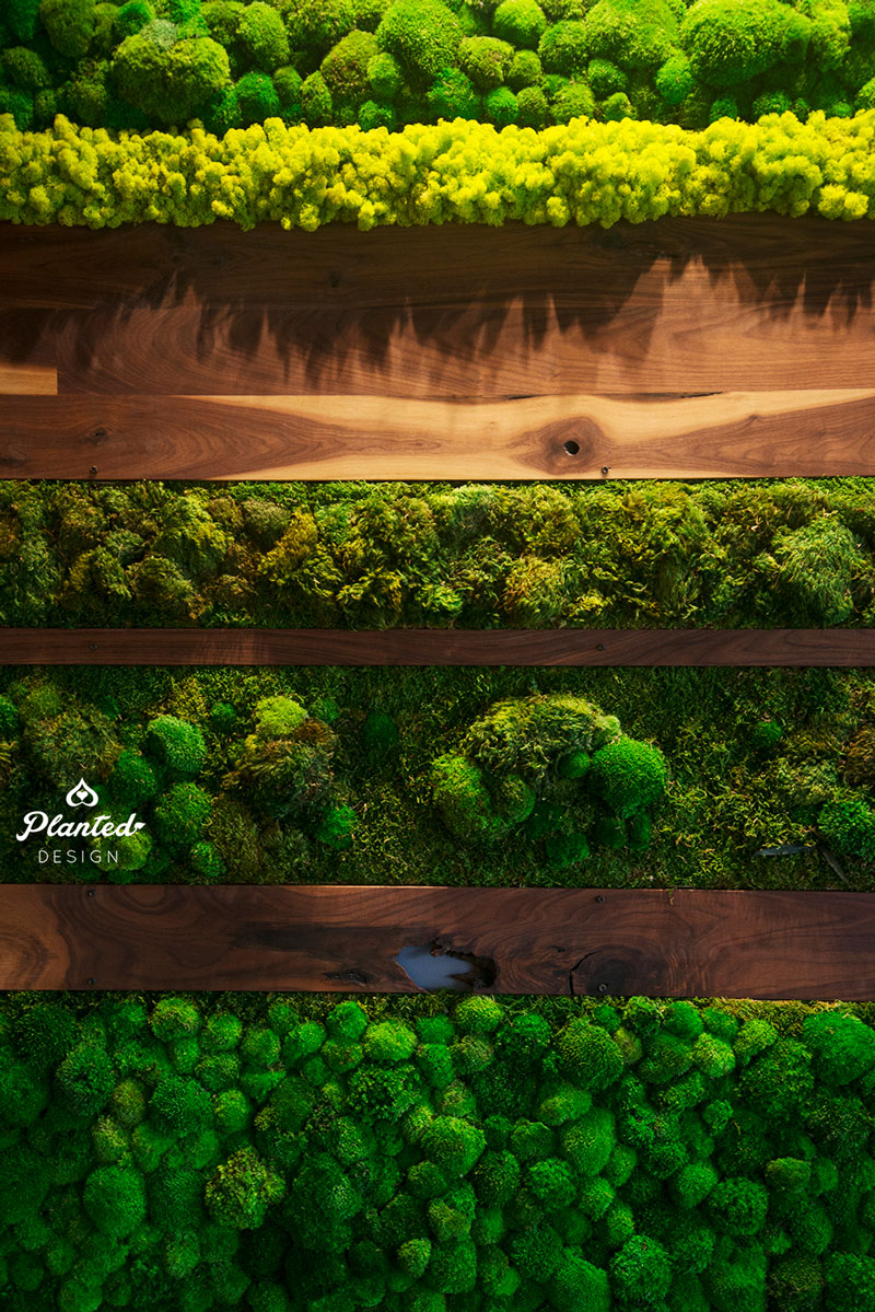 PlantedDesign-Moss-Wall-SF-IronSource-11.jpg