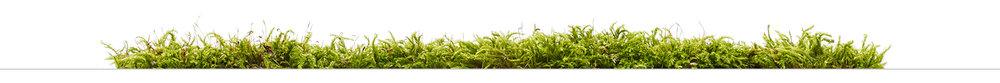 planter-thin-line2.jpg
