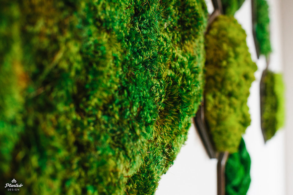 Planted Design Custom Living Preserved Moss Wall Columns Corner NRDC Offices San Francisco Maintenance Free LogoWEB_12.jpg