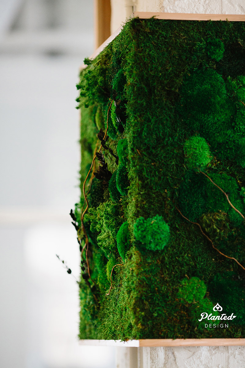 Planted-Design-Custom-Living-Preserved-Moss-Wall-Columns-Corner-NRDC-Offices-San-Francisco-Maintenance-Free-LogoWEB_8.jpg