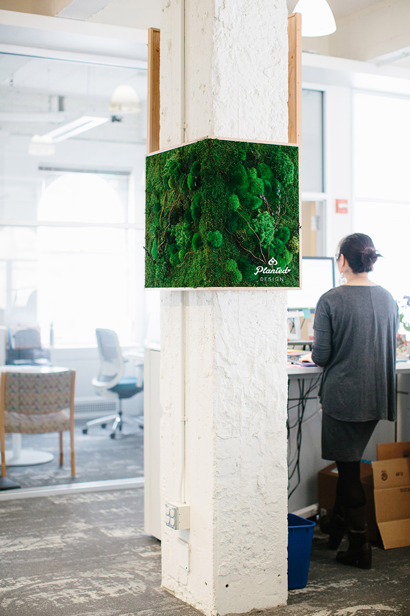 Planted-Design-Custom-Living-Preserved-Moss-Wall-Columns-Corner-NRDC-Offices-San-Francisco-Maintenance-Free-LogoWEB_1.jpg