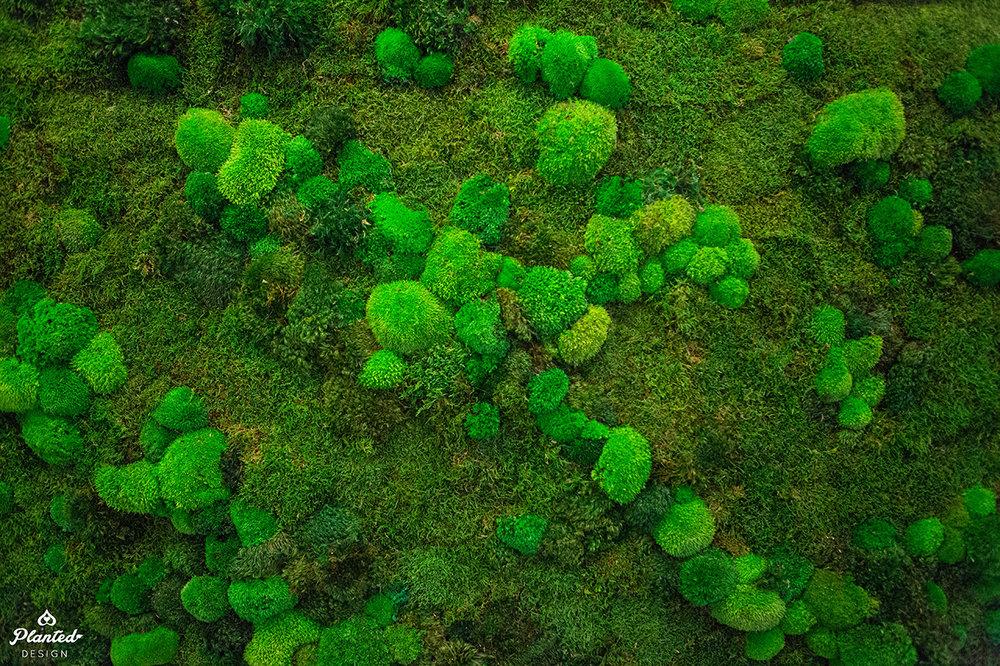 PlantedDesignAdrollPreservedMossWallLogo-6.jpg