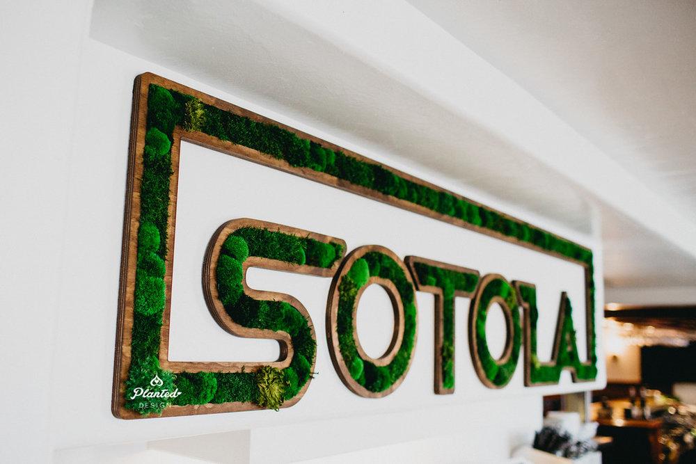 Sotola - Moss Wall