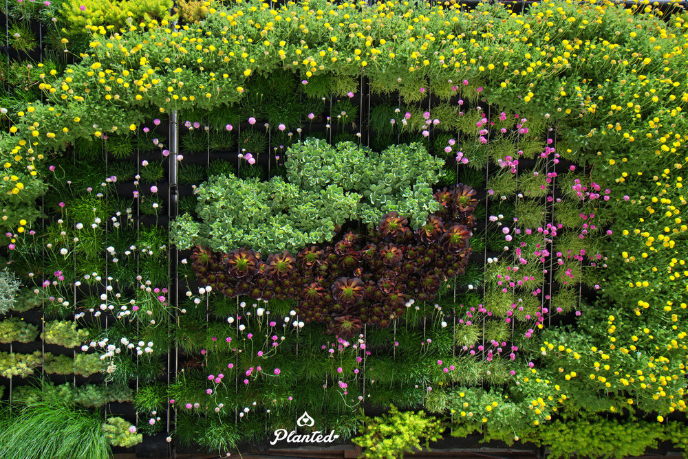 Planted-Design-Florafelt-Pro-System-Adams-Pools-Pleasanton-California-38-_CJB4433, planted design, living wall, plants, contemporary, magical, exterior design, landscaping, succulents, ferns, flowers.jpg