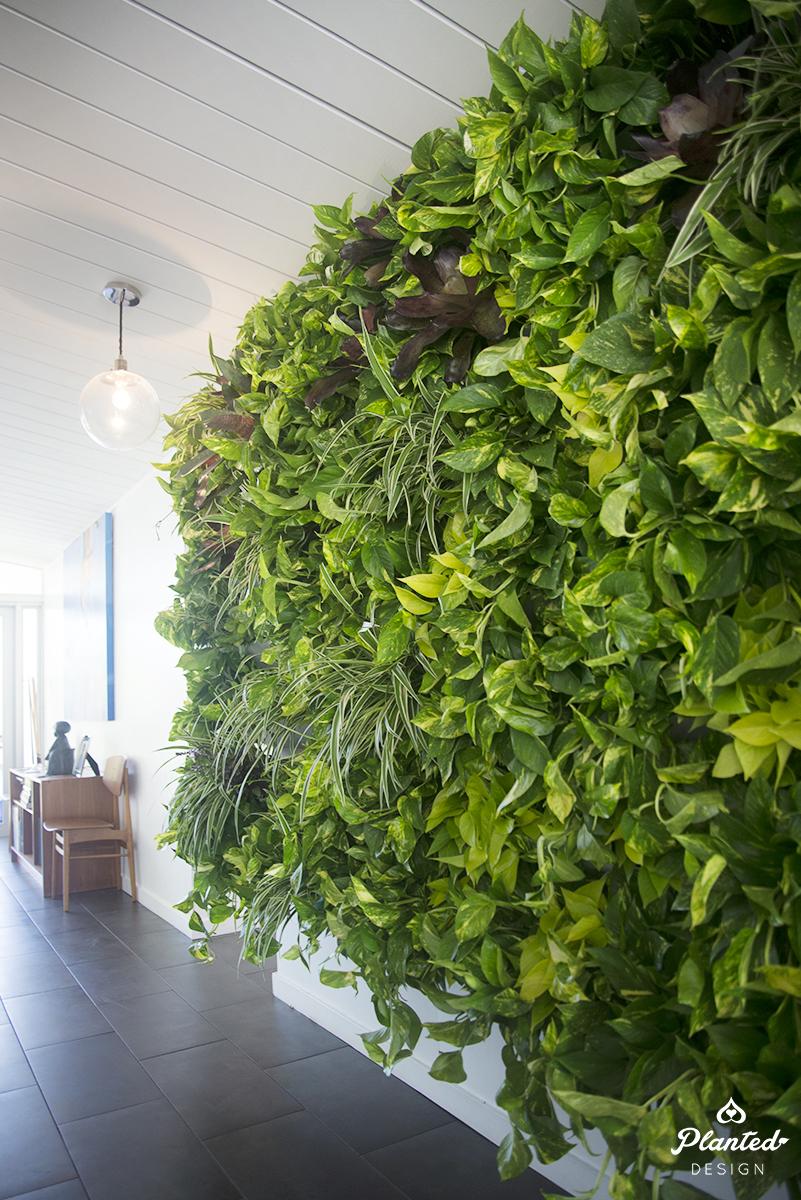 Living Wall -
