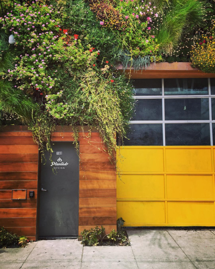 To know more about San Francisco's first community built living wall click here