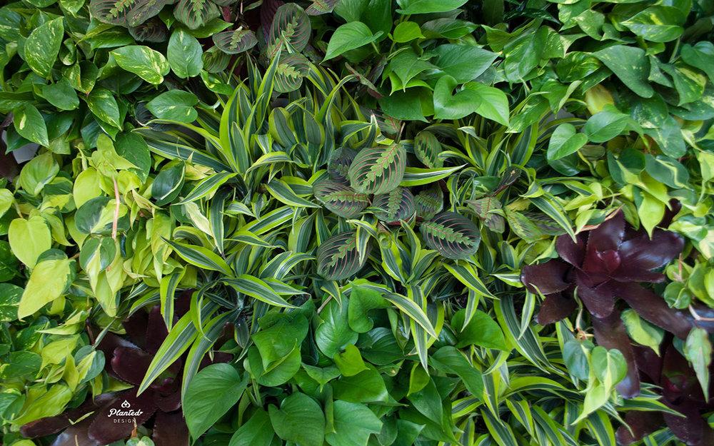 PlantedDesignInteriorLivingPlantWallAirQualityResidentialWeb6.jpg