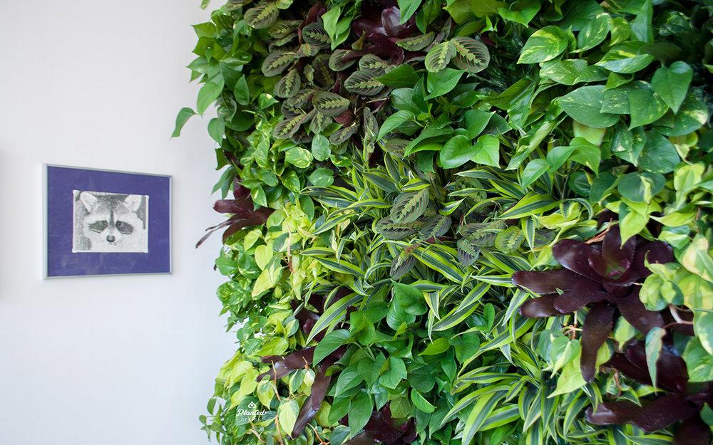 PlantedDesignInteriorLivingPlantWallAirQualityResidentialWeb10.jpg