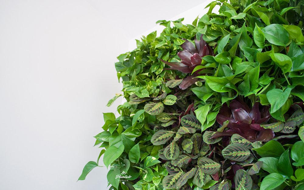 PlantedDesignInteriorLivingPlantWallAirQualityResidentialWeb9.jpg