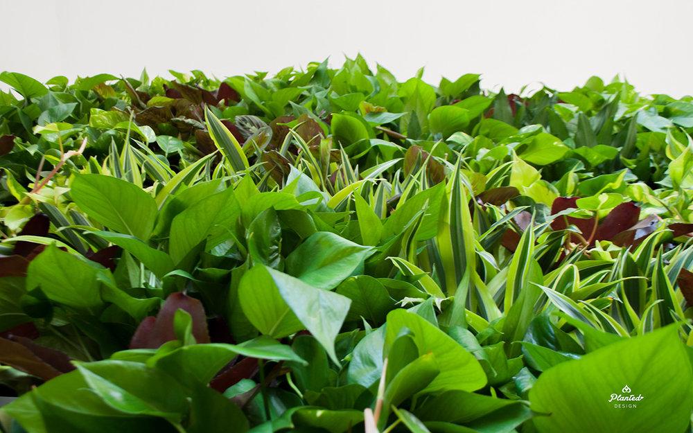 PlantedDesignInteriorLivingPlantWallAirQualityResidentialWeb7.jpg