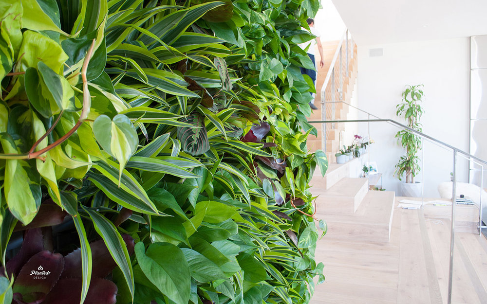 PlantedDesignInteriorLivingPlantWallAirQualityResidentialWeb4.jpg