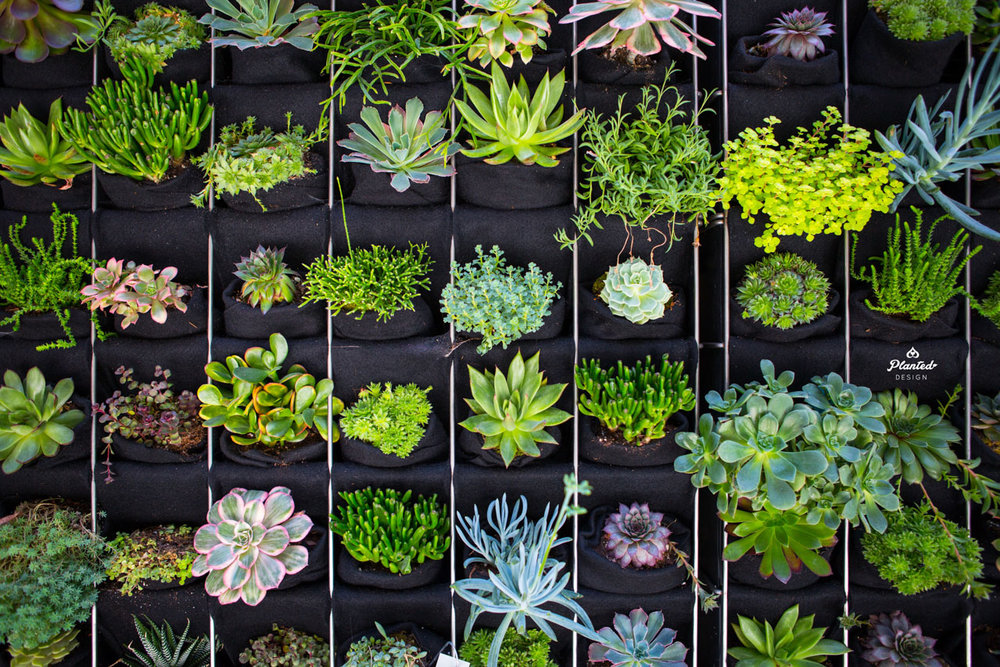PlantedDesignCustomLivingSucculentPlantWallRussStreetSanFrancsicoLogo-4.jpg
