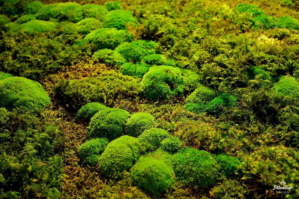 PlantedDesignPreservedMossWallApothecariumLombardSanFrancisco07.jpg