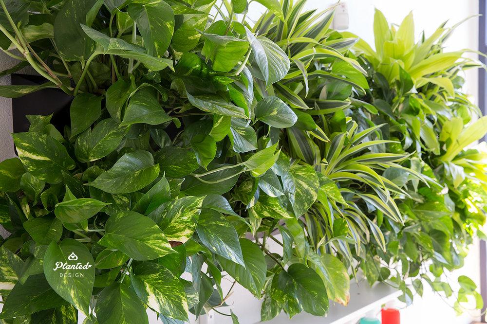 PlantedDesignLivingVerticalPlantWallPilatesNowOakland4.jpg