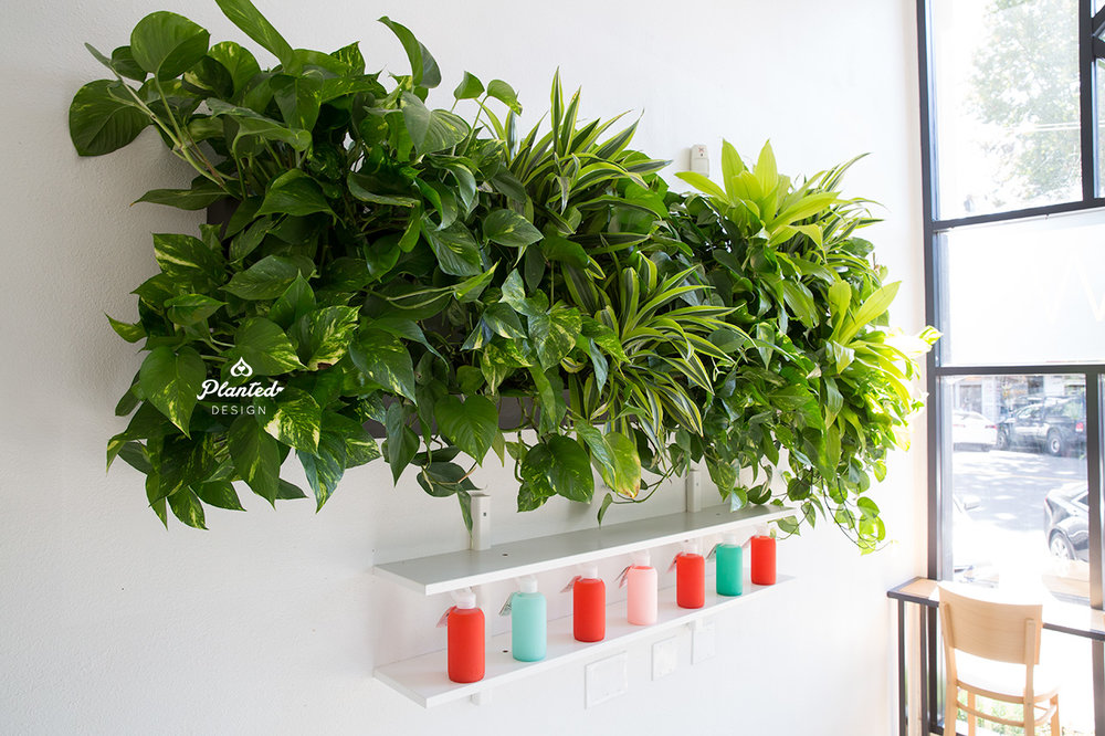 PlantedDesignLivingVerticalPlantWallPilatesNowOakland3.jpg