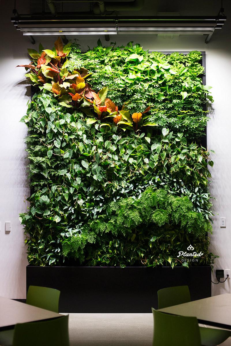 PlantedDesignGoogleAccessLivingVerticalWallRestaurantSunnyvale01_Web.jpg