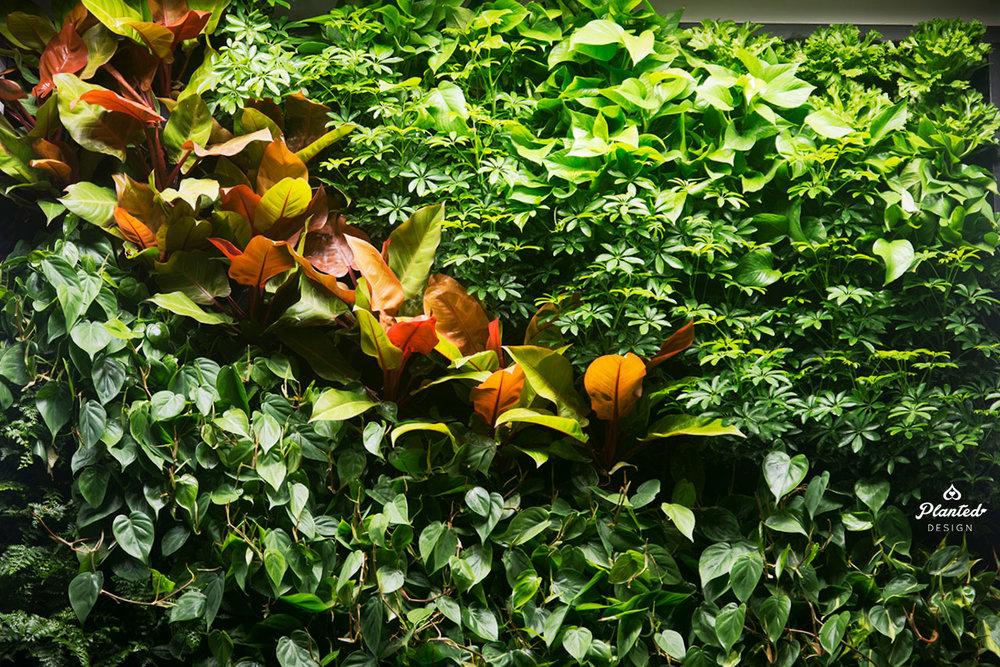 PlantedDesignGoogleAccessLivingVerticalWallRestaurantSunnyvale07_Web.jpg