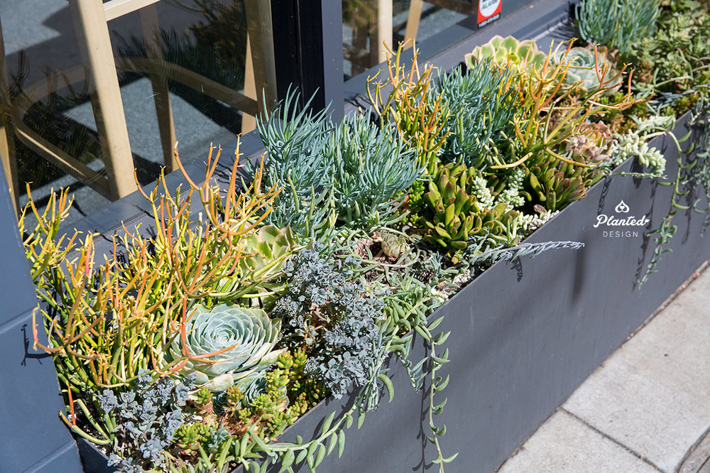 PlantedDesignGardenBedArrangementPilatesNow1.jpg