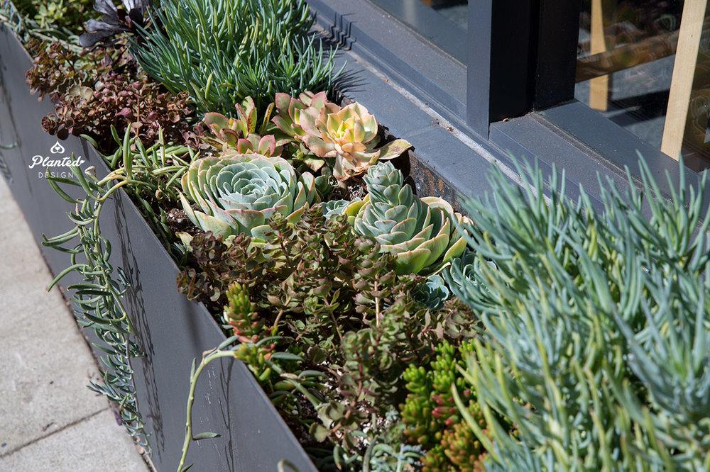 PlantedDesignGardenBedArrangementPilatesNow5.jpg