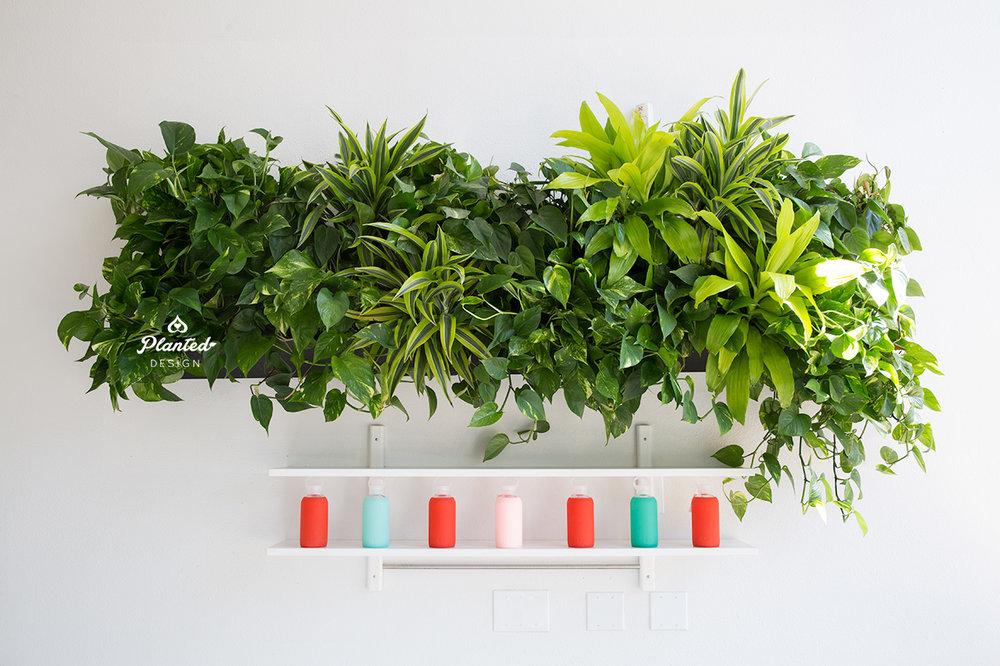 Pilates Now - Living Wall