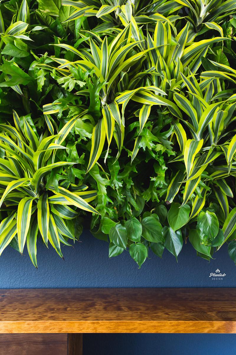 PlantedDesignLivingWallKirschenbaumLawCorporationOakland_2397.jpg
