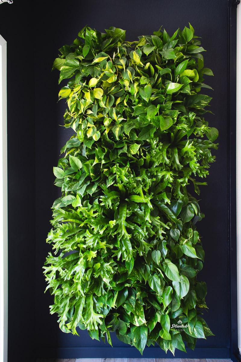 PlantedDesignLivingWallKirschenbaumLawCorporationOakland_2414.jpg