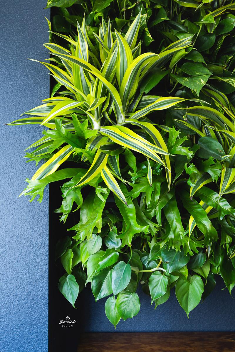 PlantedDesignLivingWallKirschenbaumLawCorporationOakland_2375.jpg