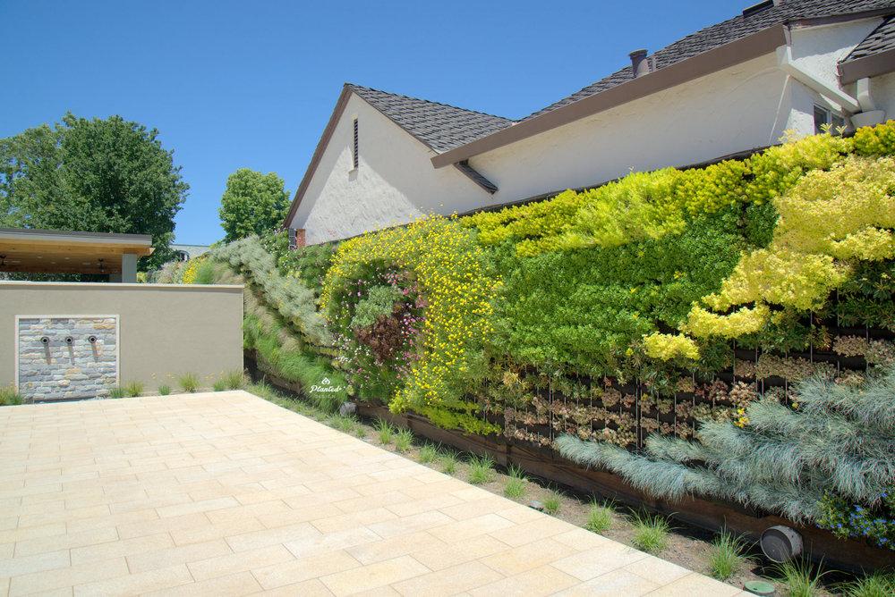 Planted-Design-Living-Wall-Pleasanton-California-24-_CJB4419.jpg