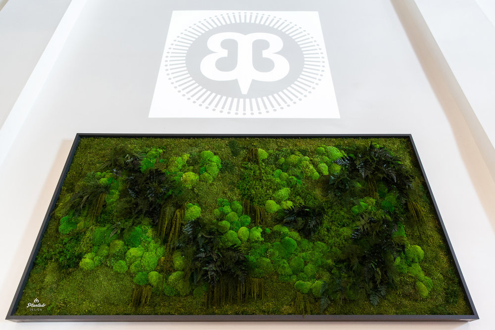 PlantedDesign_Moss_Frame_BetaBrand_Store_SanFrancisco_California_3811.jpg