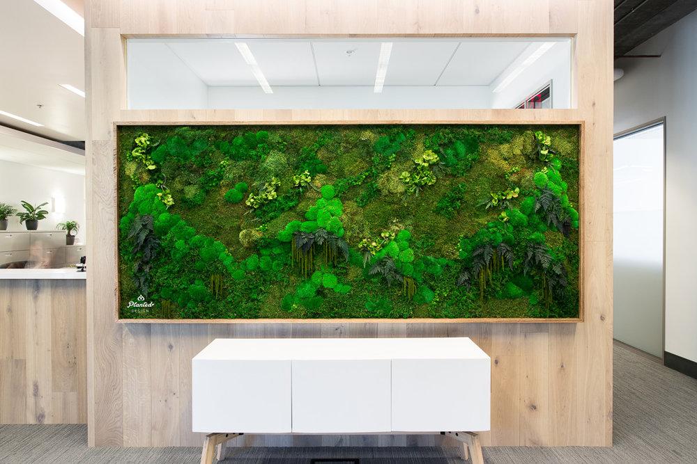 Ridge Ventures  - Moss Wall