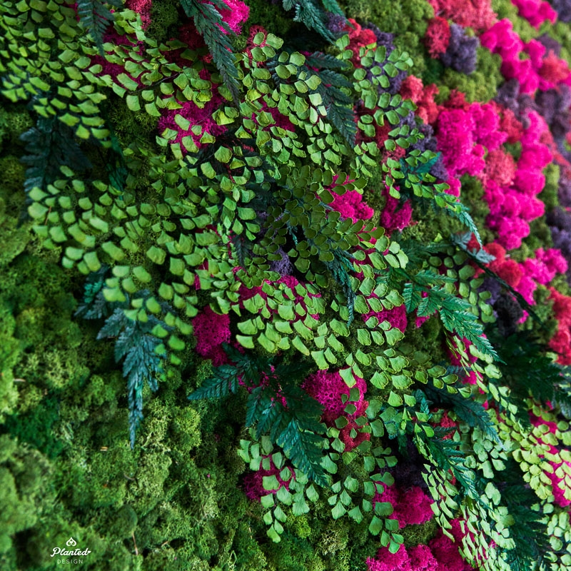 PlantedDesignBrotherVsBrotherHGTVMossPlantLivingWall_0965.jpg
