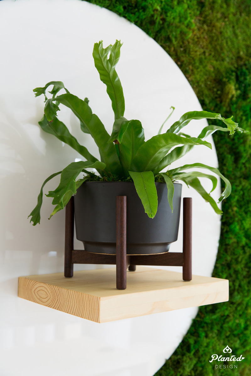PlantedDesign_MossWall_LeonandGeorge_SanFrancisco_Showroom_Shelf_5065.jpg