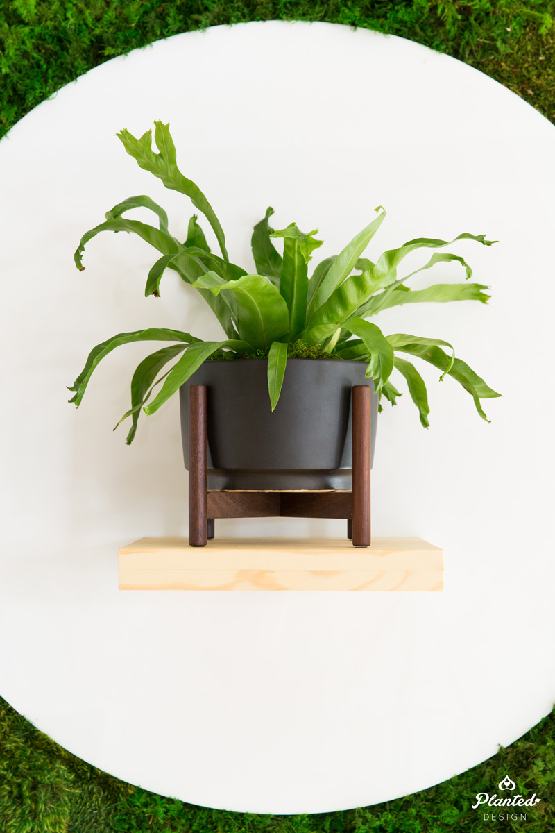 PlantedDesign_MossWall_LeonandGeorge_SanFrancisco_Showroom_Shelf_5069.jpg