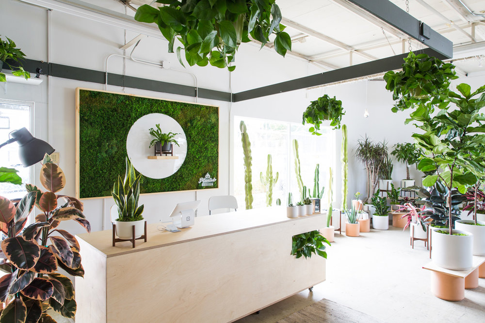 PlantedDesign_MossWall_LeonandGeorge_SanFrancisco_Showroom_Shelf_5013.jpg