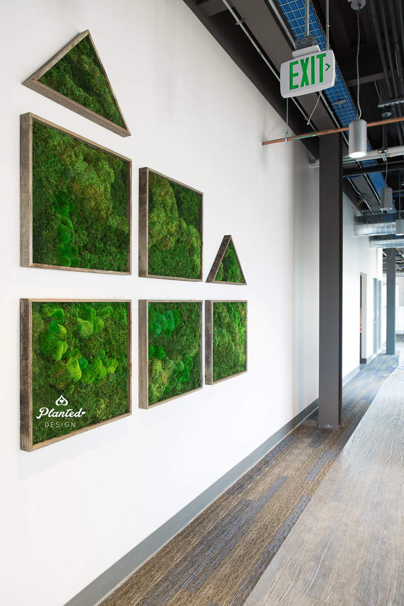 PlantedDesign_MossWall_WLButler_RedwoodCity_California_Offices_6391.jpg