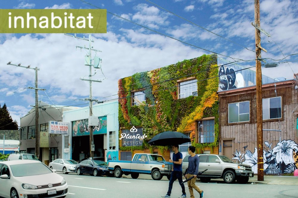San Francisco's first community-built living wall is a drought-resistant masterpiece