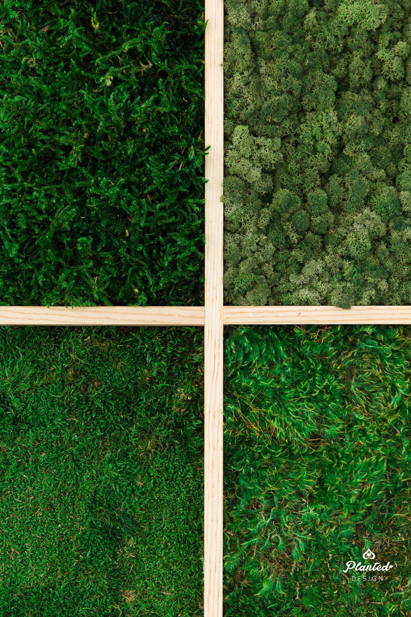 PlantedDesign_MossWall_Blue_River_Technologies_Sunnyvale_California_Reception_Wheat_Cotton_9005.jpg