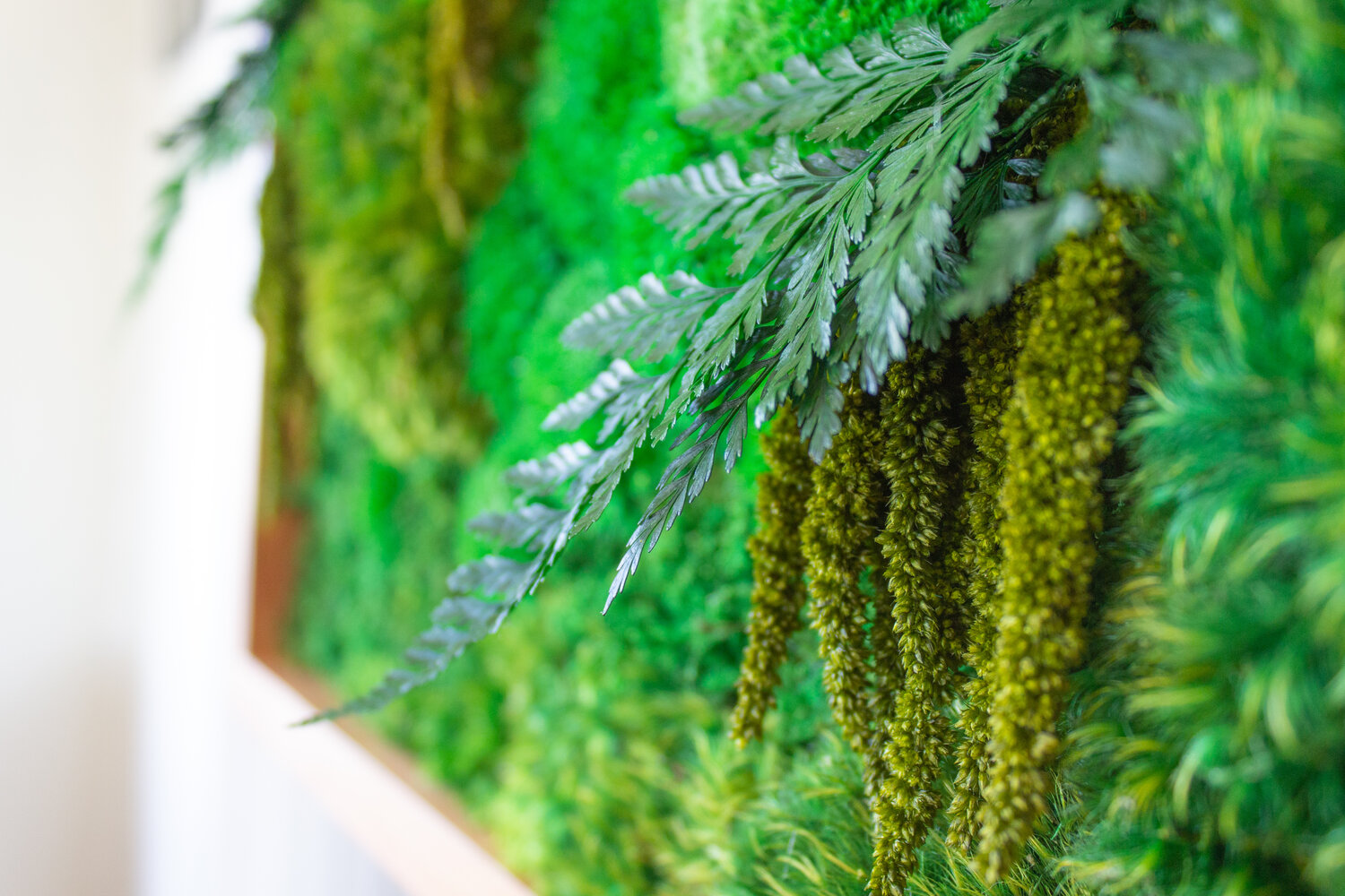 Living Walls vs. Moss Walls: Shedding Light On Our Most Frequently ...