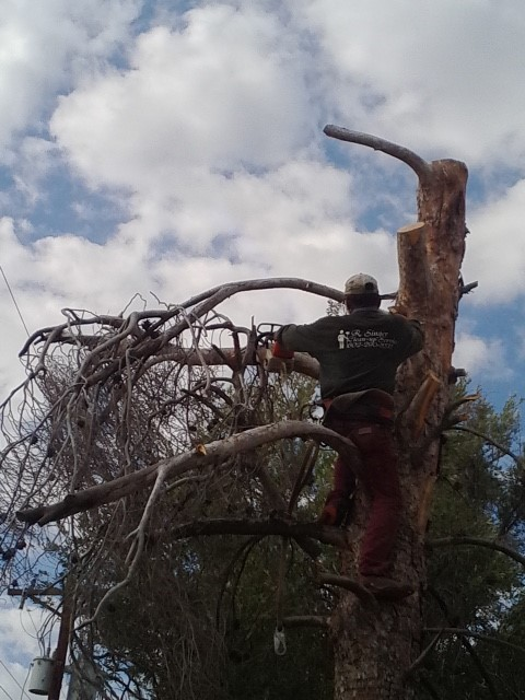 dead tree removal.jpg