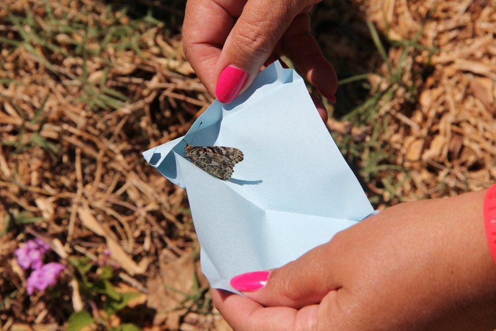 Grant Park Butterfly Garden