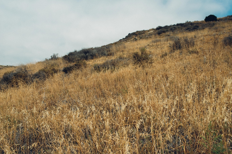 MemorialDay_Malibu_California-19.jpg