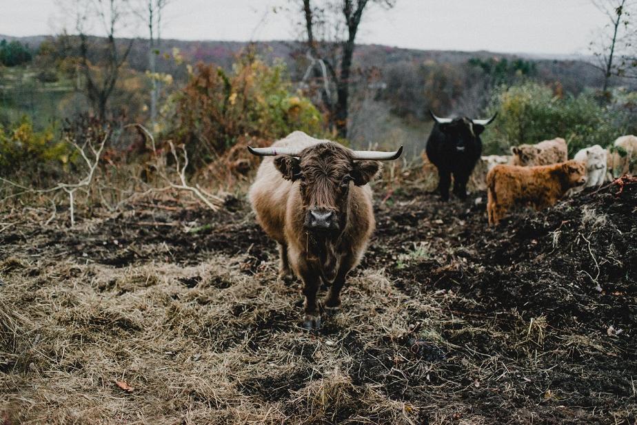Rivercrest-Farm-Wedding-Lisa+Brad_Mallory+JustinPhoto-665.JPG
