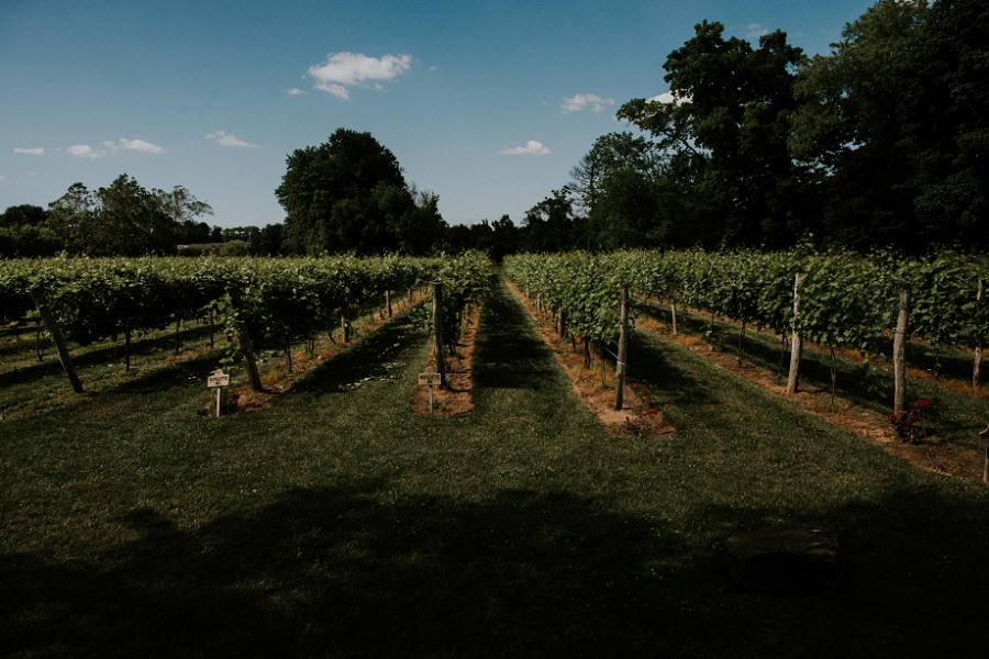 Gervasi-Vineyard-Wedding_Lauren+Jonah_MJPHOTO-282.jpg