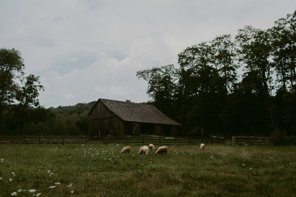 Hines-Hill-Farm-Cuyahoga-Valley-National-Park-Wedding_Emi+Andy_MJPHOTO-13.jpg