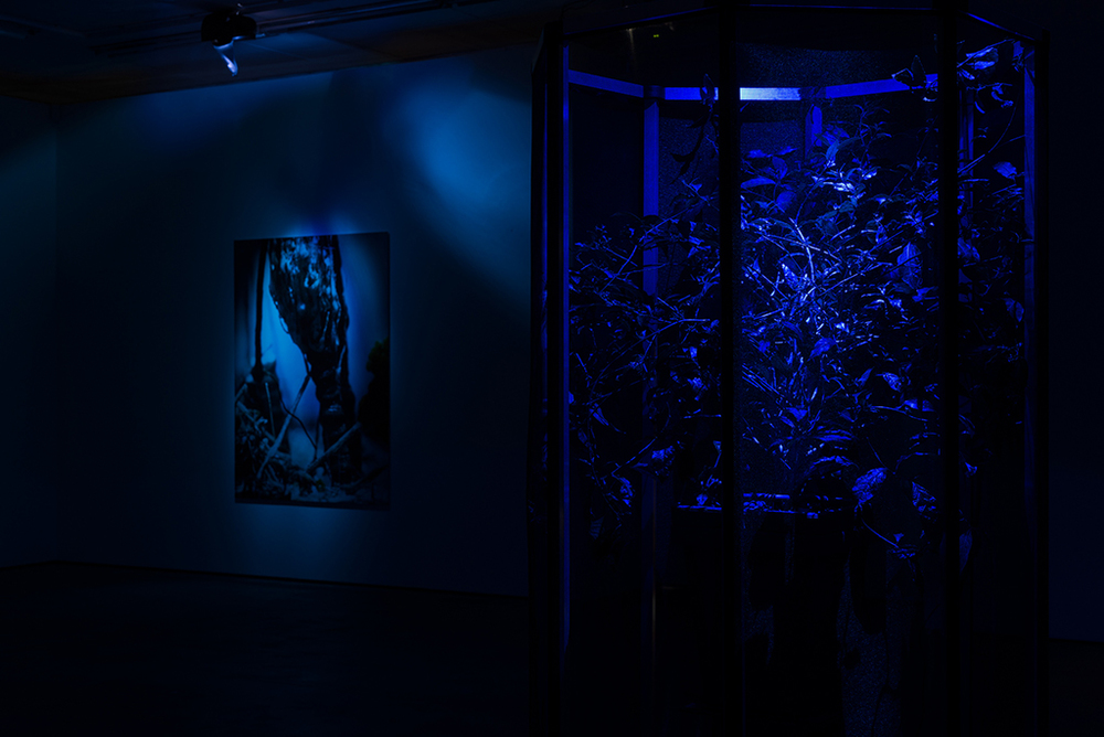 Installation view: 'Caverne' exhibition at WENTRUP, Berlin
